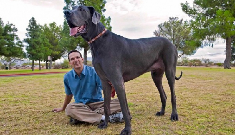 بالصور اضخم كلاب في العالم , تعالو نشوف صور كثيرة ومختلفة 11142 17