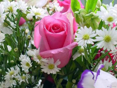 صوره صور زهور الربيع , تعالو نشوف احلي الالبومات