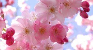 صور زهور الربيع , تعالو نشوف احلي الالبومات