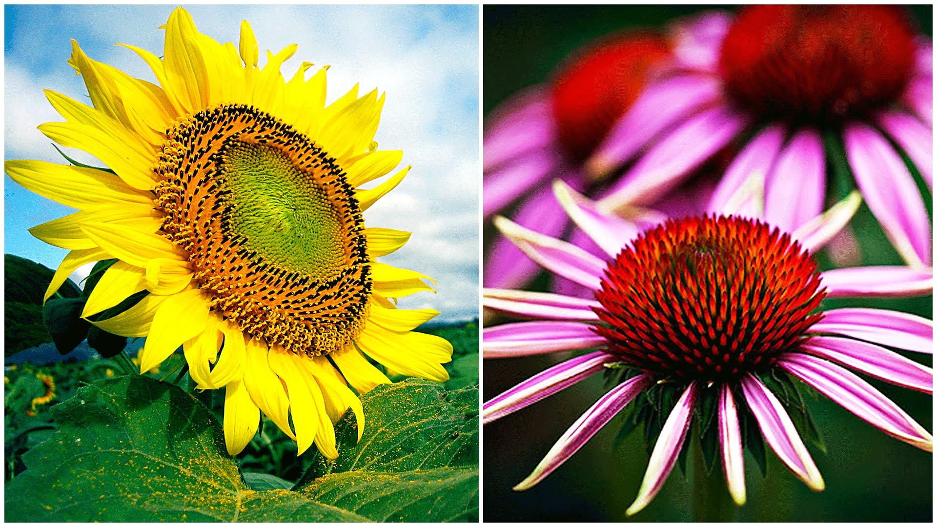 بالصور صور زهور الربيع , تعالو نشوف احلي الالبومات 11147 2
