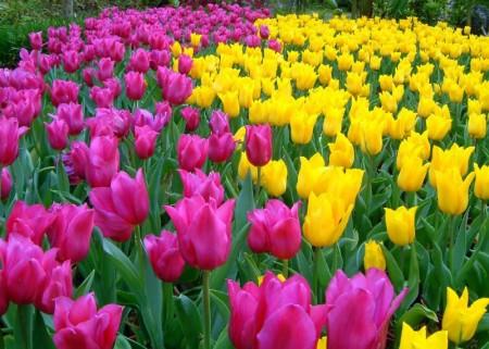 بالصور صور زهور الربيع , تعالو نشوف احلي الالبومات 11147 3