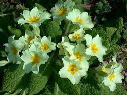 بالصور صور زهور الربيع , تعالو نشوف احلي الالبومات 11147 4