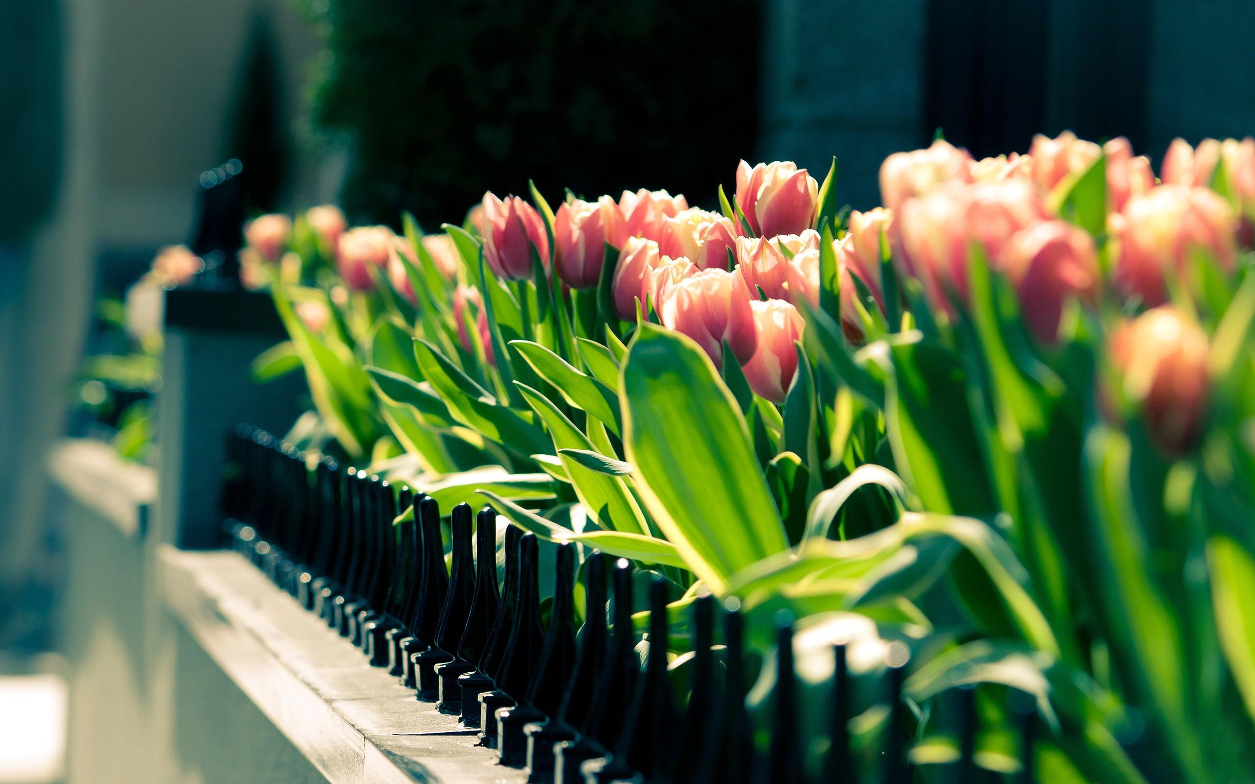 بالصور صور زهور الربيع , تعالو نشوف احلي الالبومات 11147 5