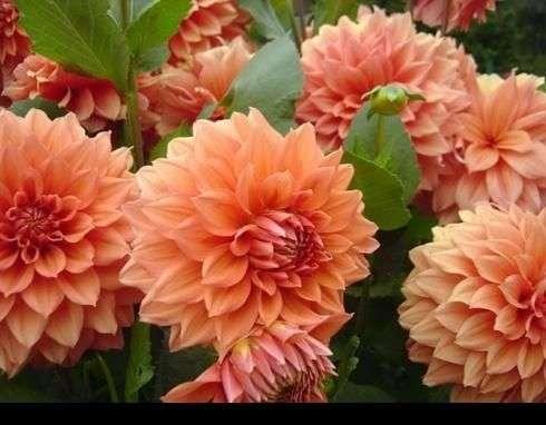 بالصور صور زهور الربيع , تعالو نشوف احلي الالبومات 11147 6