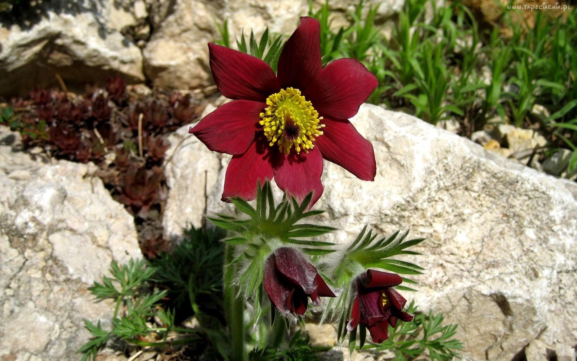 بالصور صور زهور الربيع , تعالو نشوف احلي الالبومات 11147 7
