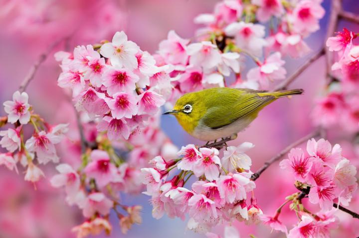 بالصور صور زهور الربيع , تعالو نشوف احلي الالبومات 11147 8