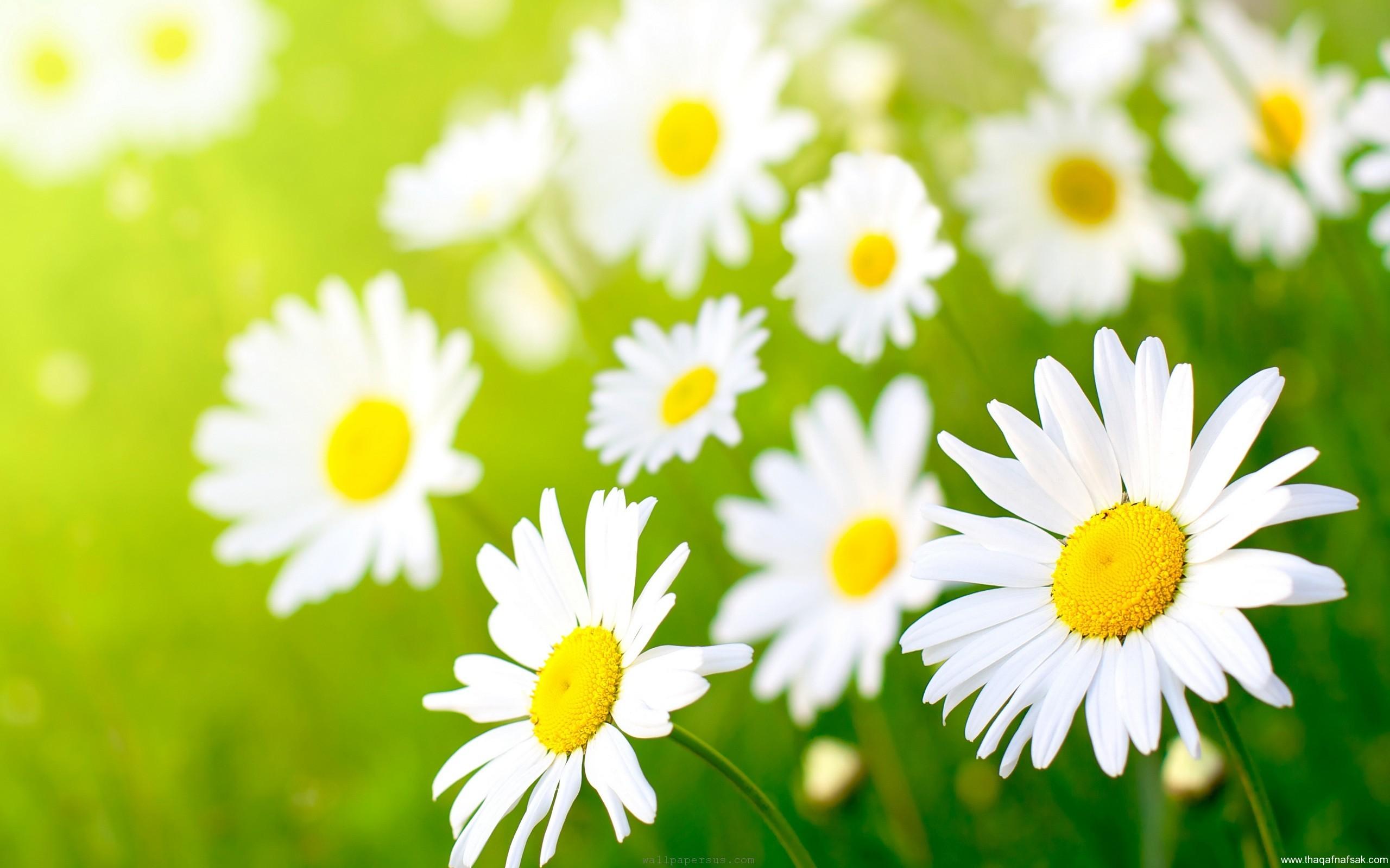 بالصور صور زهور الربيع , تعالو نشوف احلي الالبومات 11147 9