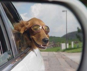 بالصور الصور المضحكة للحيوانات , الطف واظرف المواقف 11153 6