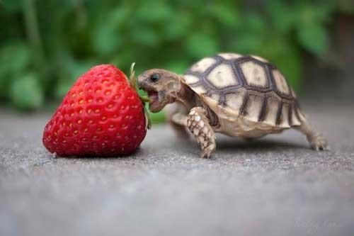 بالصور الصور المضحكة للحيوانات , الطف واظرف المواقف 11153 8