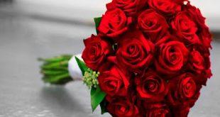 صوره ياليت الورد مايذبل , اجمل صور للورد من الطبيعه