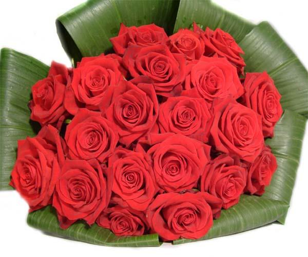 صورة ياليت الورد مايذبل , اجمل صور للورد من الطبيعه