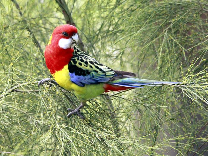 بالصور صور طيور نادرة , اجمل صور للطيور الجميله 11316 4