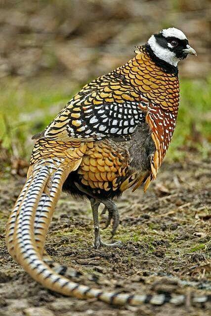 بالصور صور طيور نادرة , اجمل صور للطيور الجميله 11316 6