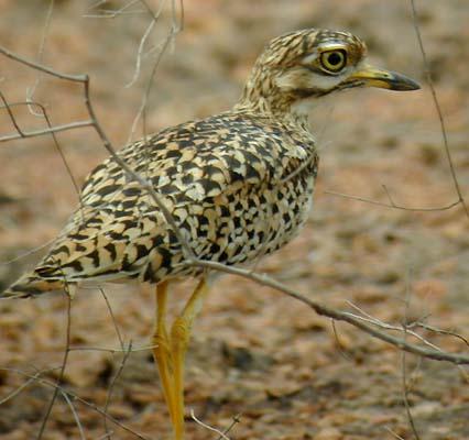 بالصور صور طيور نادرة , اجمل صور للطيور الجميله 11316 7