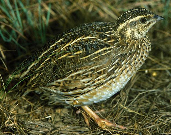 بالصور صور طيور نادرة , اجمل صور للطيور الجميله 11316 8