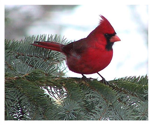 بالصور صور طيور نادرة , اجمل صور للطيور الجميله 11316 9