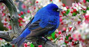 صور عن الطبيعة , اجمل صور مناظر طبيعيه