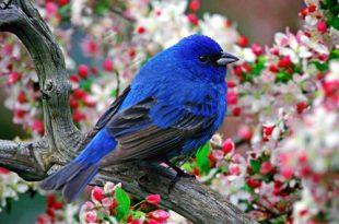 صورة صور عن الطبيعة , اجمل صور مناظر طبيعيه