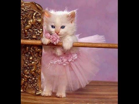 صورة اجمل قطة في العالم , صور احلى قطط صغيرة