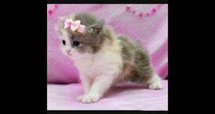 اجمل قطة في العالم , صور احلى قطط صغيرة