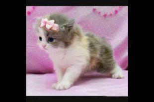 صوره اجمل قطة في العالم , صور احلى قطط صغيرة