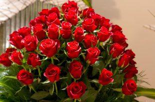 صوره باقات من الورد , اجمل صور للورود الجميله