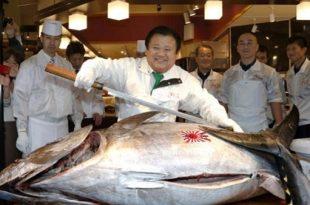 صوره اغلى سمكة في العالم , صور اجمل سمك رائعه