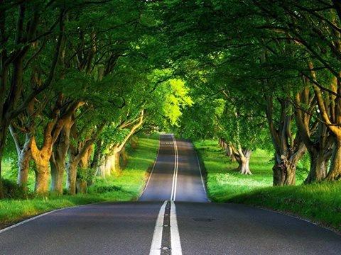 صوره اجمل الطرق في العالم , من جمالها تنسى القيادة
