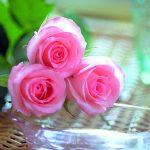 صور احلى الورود , ورود ليس لها مثيل