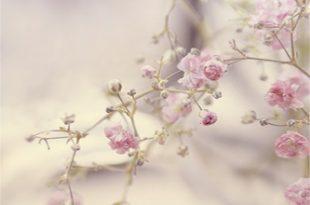 صورة خلفيات ورود ناعمة , الورود رمز الومانسية