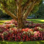اجمل حدائق العالم , حدائق تزدهر بالالوان