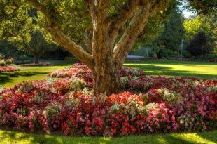 صوره اجمل حدائق العالم , حدائق تزدهر بالالوان
