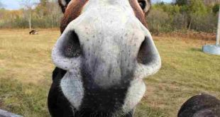 بالصور لقطات مضحكة للحيوانات , صور لحيوانات ظريفة unnamed file 1272 310x165