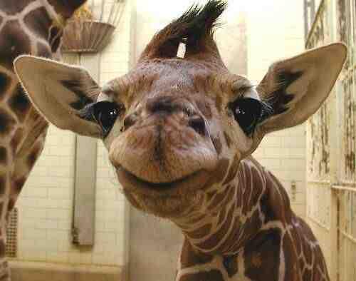 بالصور لقطات مضحكة للحيوانات , صور لحيوانات ظريفة unnamed file 1275