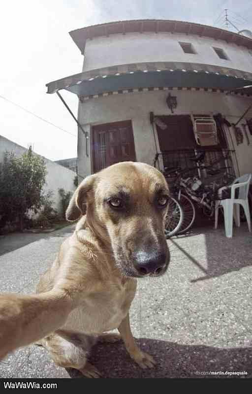بالصور لقطات مضحكة للحيوانات , صور لحيوانات ظريفة unnamed file 1276