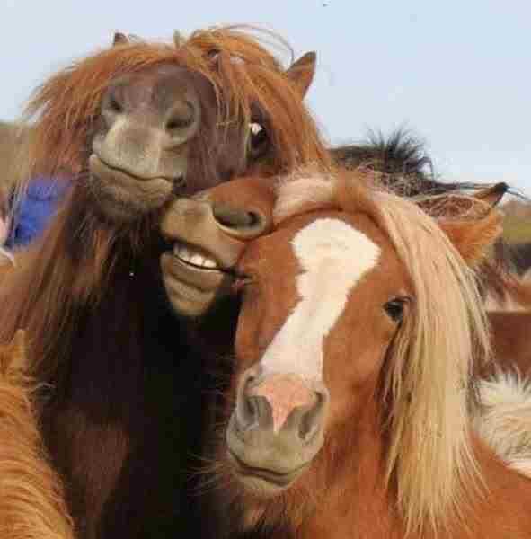 بالصور لقطات مضحكة للحيوانات , صور لحيوانات ظريفة unnamed file 1278