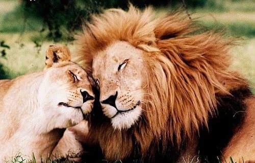 بالصور لقطات مضحكة للحيوانات , صور لحيوانات ظريفة unnamed file 1283