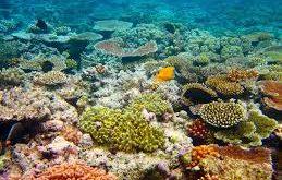صوره الحيد المرجاني العظيم , من عجائب استراليا المائيه