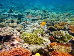 الحيد المرجاني العظيم , من عجائب استراليا المائيه