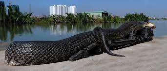 صورة صور اكبر ثعبان , الرعب بعينه