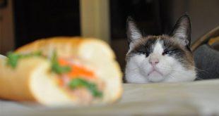 صور قطط مضحكة , صور متنوعة