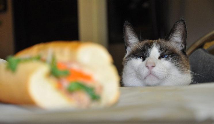 صوره صور قطط مضحكة , صور متنوعة