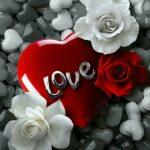 صور باللون الاحمر , قلوب ودبديب وزهور جميلة جدا