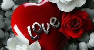 صوره صور باللون الاحمر , قلوب ودبديب وزهور جميلة جدا