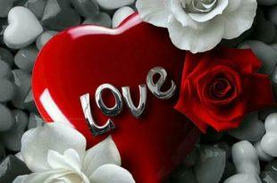 صورة صور باللون الاحمر , قلوب ودبديب وزهور جميلة جدا