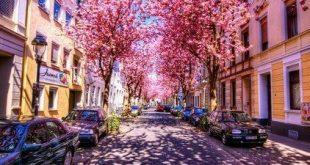 صوره صور من الطبيعه , اجمل حدائق وشوارع ساحرة