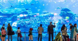 صورة صور حوض سمك , اكبر احواض سمك عملاقة ومطاعم