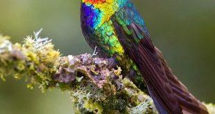 اغرب الطيور في العالم , اجمل طاير سبحان الله