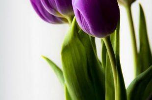 صورة اجمل خلفيات ورود , زهور الربيع جميلة