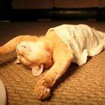 صور مضحكة عن النوم , نوم سلطان مضحكة جدا